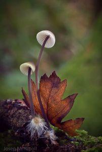 woods-mushrooms